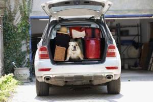 packing-animals-resized